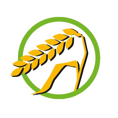 Getreidehaltige Lebensmittel & Zöliakie: Wenn Gluten den Körper quält
